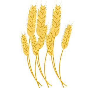 Illustration von Getreide - Gelb