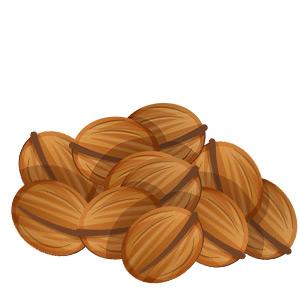 Illustration von Walnüssen - Nüsse und Paleo